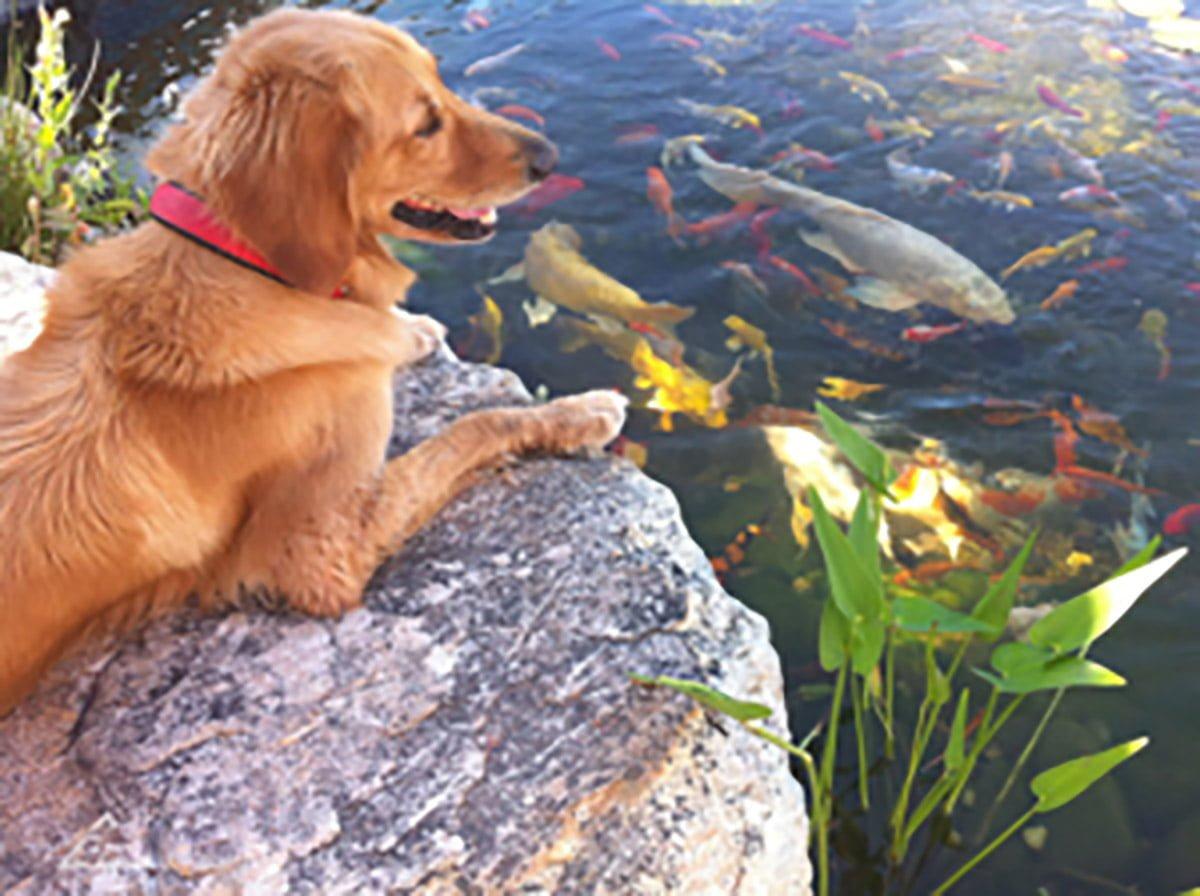 dog and pond