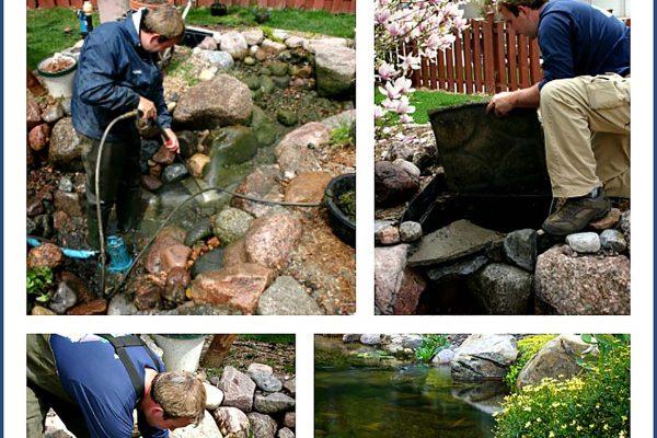 pond spring clean
