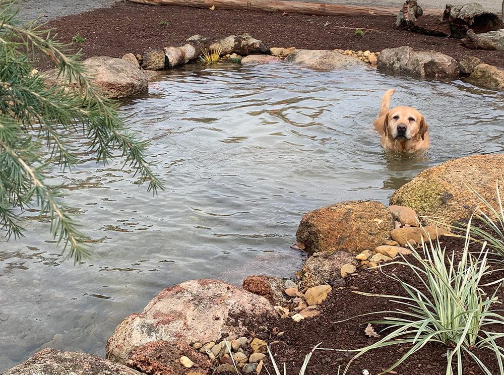 Puppy enjoying a swim at Avalon Nursery